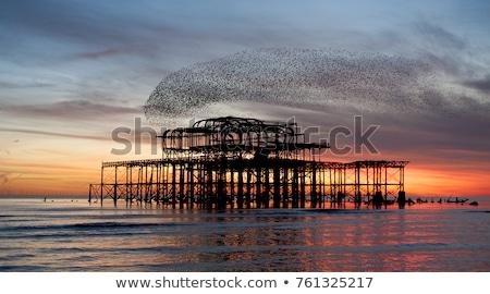 Flock of starlings over the west pier in Brighton Stock photo © dutourdumonde