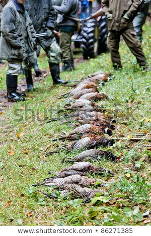 Stockfoto: Excludes Of Caught Animals With Hunters