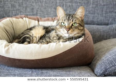 Kat Blur cute hurken gras oog Stockfoto © wxin