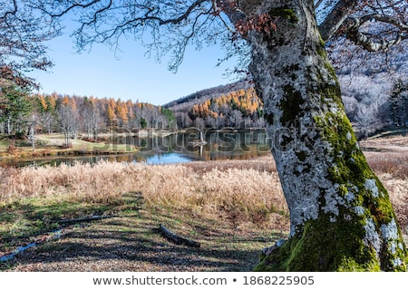 Göl kuzey batı ağaç bahar orman Stok fotoğraf © MaxBarattini