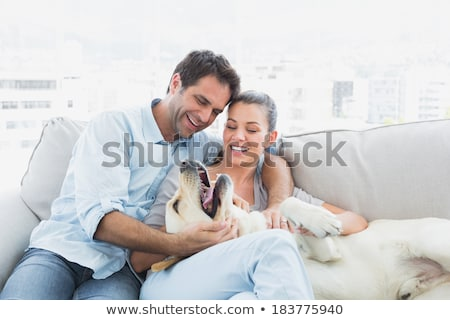 golden · retriever · hond · bank · geïsoleerd · witte · dier - stockfoto © wavebreak_media