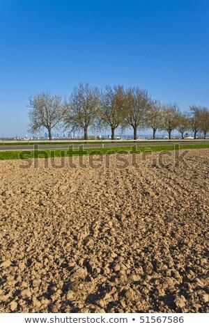 oude · boerderij · trekker · grasveld · klaar · borgtocht - stockfoto © meinzahn