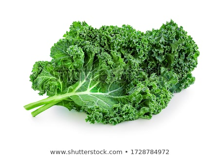 kale leaf Stock photo © M-studio