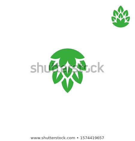 cerveja · saboroso · cerveja · reprodução · isolado - foto stock © conceptcafe