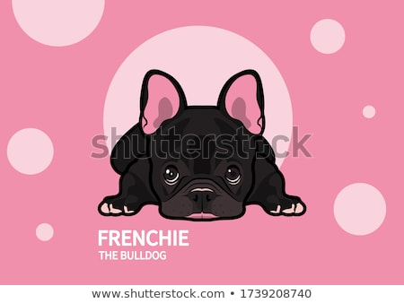 animal dog French bulldog lying  Stock photo © OleksandrO