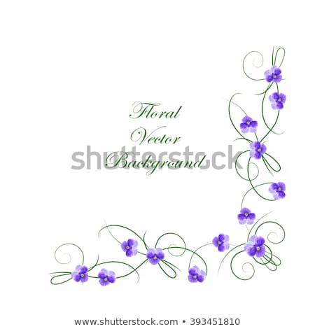 фиолетовый · цветы · уголки · пусто · кадр · вектора - Сток-фото © robuart