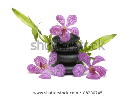 lucky bamboo and three orchid flower on white background stock photo © epitavi