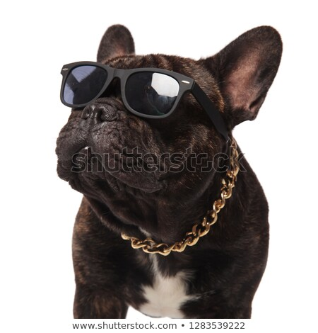 head of curious french bulldog wearing sunglasses and collar Stock photo © feedough