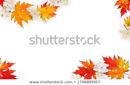 exotisch · oranje · bloesem · bloem · botanisch · tuinen - stockfoto © boggy
