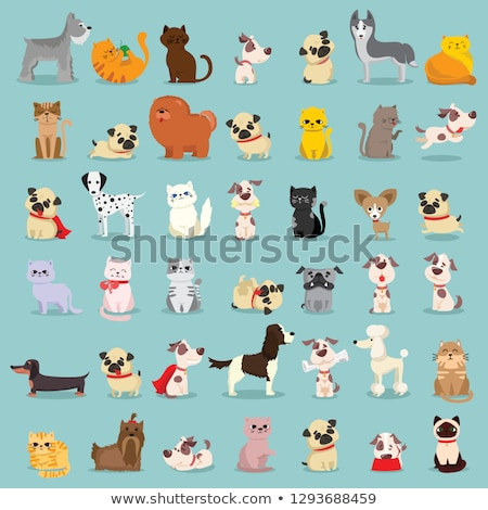 dog and kitten characters cartoon illustration Stock photo © izakowski
