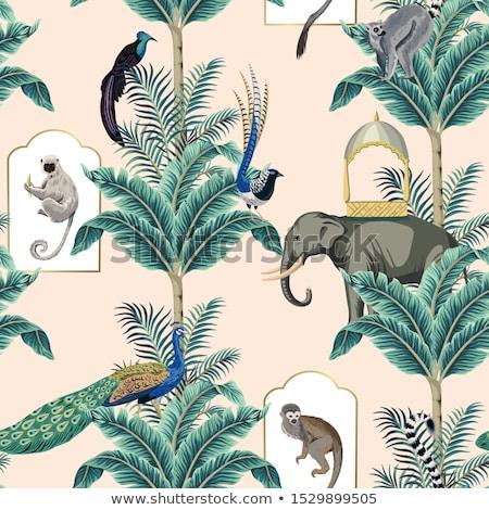 ilustração · natureza · fundo · preto · macaco · desenho - foto stock © colematt