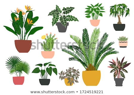 vector set of pots stock photo © olllikeballoon