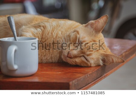 Cat in the orange coffee cup Stock photo © Artspace
