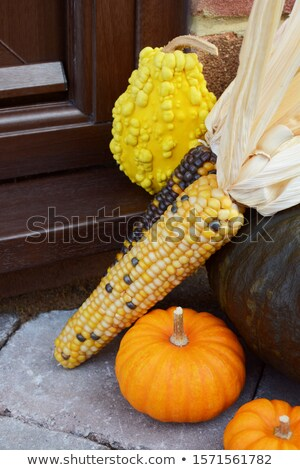 Ornamental sweetcorn and gourds as a Thanksgiving decoration Stock photo © sarahdoow