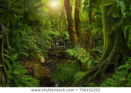 Tropical floresta dente estrada luz árvores Foto stock © dmitry_rukhlenko