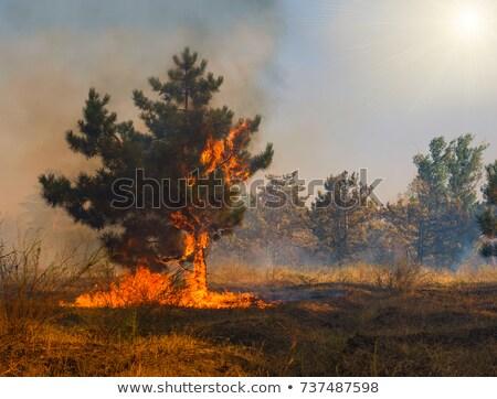 Fogo árvores neve montanha árvore paisagem Foto stock © mariephoto
