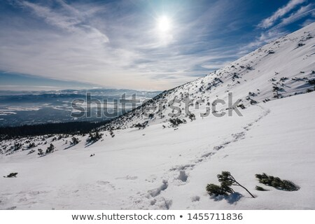 low tatras in winter stock photo © harlekino