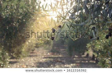 アンダルシア 風景 スペイン 風光明媚な 山 ストックフォト © rognar