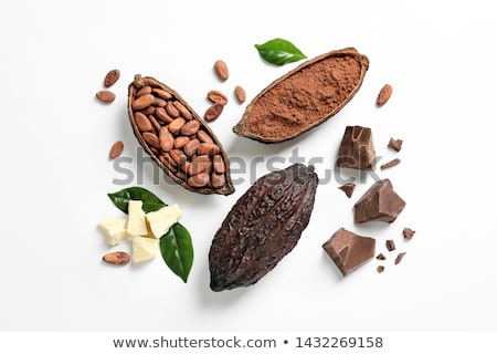 kakaó · bab · izolált · fehér · csoport · desszert - stock fotó © joannawnuk