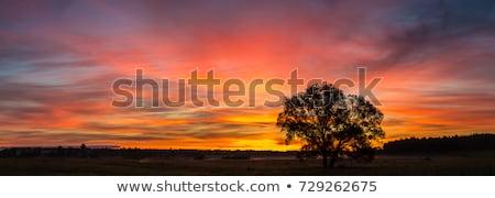 Stok fotoğraf: Güzel · gün · batımı · alan · gökyüzü · bahar · doğa