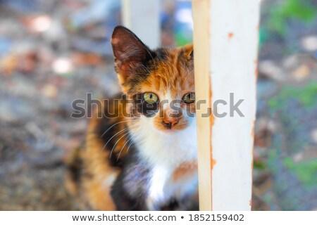 Kitten hidding behind a chair Stock photo © dutourdumonde