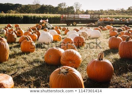 Maze Harvest Stock photo © rghenry