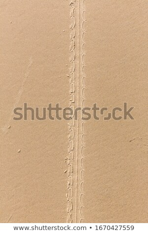 Motorbike tread in sand Stock photo © Undy
