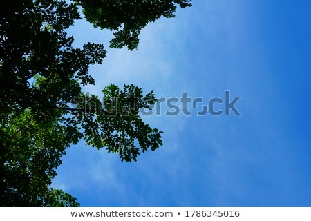 Fa ugatás gyönyörű felhők égbolt előtér Stock fotó © markdescande
