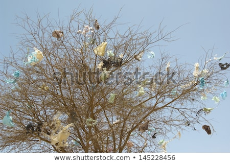 Plastic Bag Caught in a Tree Stock photo © brianguest