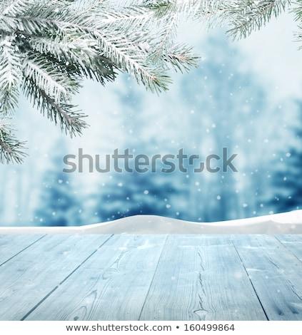 にログイン 冬 風景 実例 森林 自然 ストックフォト © adrenalina