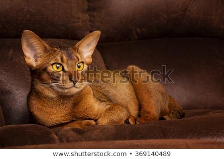 kedi · kafa · doğa · saç · hayvan - stok fotoğraf © cynoclub
