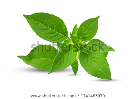 Lemon basil Ocimum basilicum, paths Stock photo © maxsol7