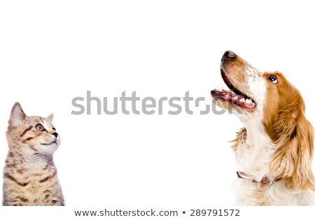 Meraklı köpekler kediler beyaz ayakta Stok fotoğraf © feedough