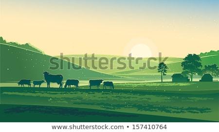 Természet nyár tájkép tehén legelő vektor Stock fotó © MarySan