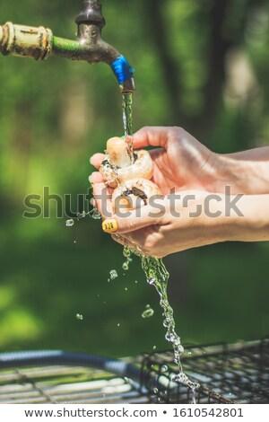 kettő · gombák · champignon · fény · étel · természet - stock fotó © arsgera