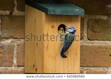 Azul teta sozinho nu ramo topo Foto stock © sarahdoow