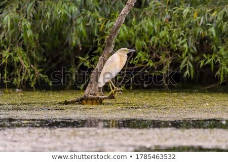 鷺 · 草で覆われた · 草 · 鳥 · アフリカ - ストックフォト © mady70