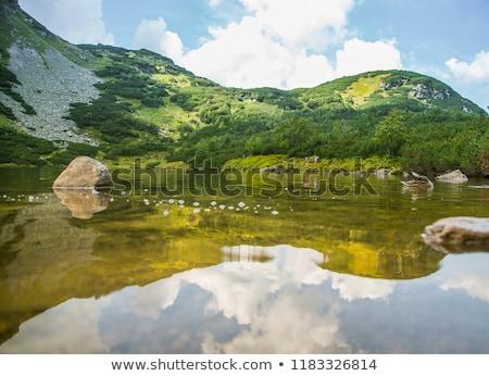 water bird swimming on lake surface stock photo © taviphoto