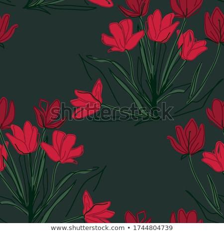 Colorido tulipa cartão eps 10 vetor Foto stock © beholdereye
