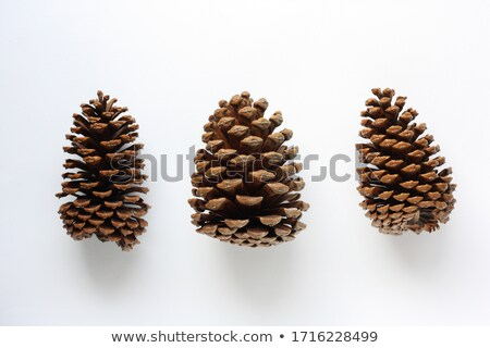 Pine Cone Pick up Stock photo © rghenry