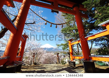 landscape with blossoming sakura japan sea sunset stock photo © liolle