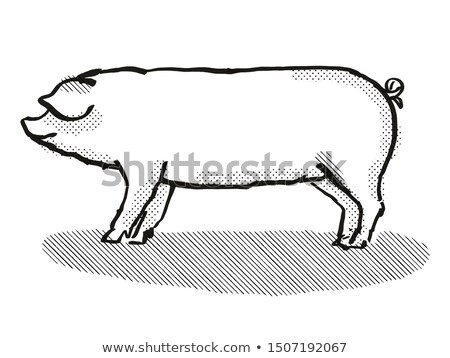 свинья Cartoon ретро рисунок стиль Сток-фото © patrimonio