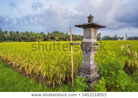 Tradicional casa espíritos arrozal bali Indonésia Foto stock © galitskaya