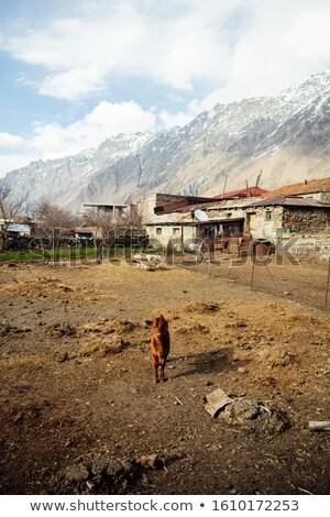 Pequeno cabra aldeia região montanha rural Foto stock © boggy