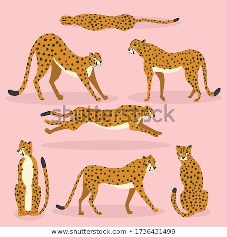 Collection of cute hand drawn cheetahs on pink background, standing, stretching, running and walking Stock photo © BlueLela