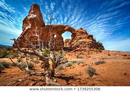 Erosie fenomeen stenen park Utah USA Stockfoto © flariv