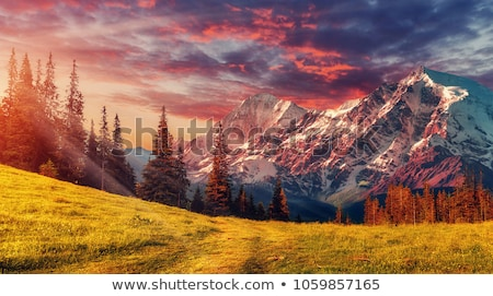 ősz hegy erdő napos színes fák Stock fotó © wildman
