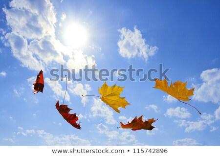 Vallen bladeren hemel Rood esdoorn Stockfoto © antkevyv