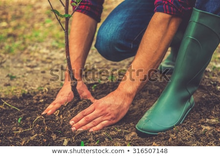 planting tree in the garden   stock photo © Petkov