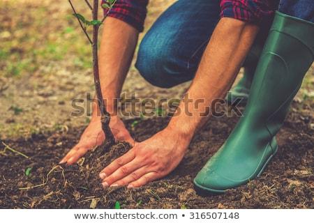 ültet fa kert három Föld zöld Stock fotó © Petkov